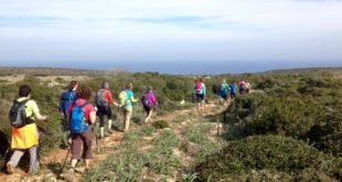 hiking nordic walking